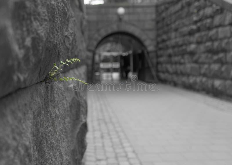 Planta verde en el ambiente descolorido fotos de archivo