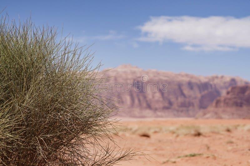 Planta verde en el oasis del desierto imagenes de archivo