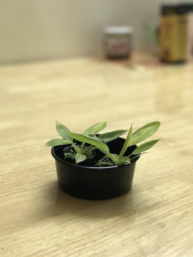 Planta verde en la tabla del ordenador foto de archivo libre de regalías