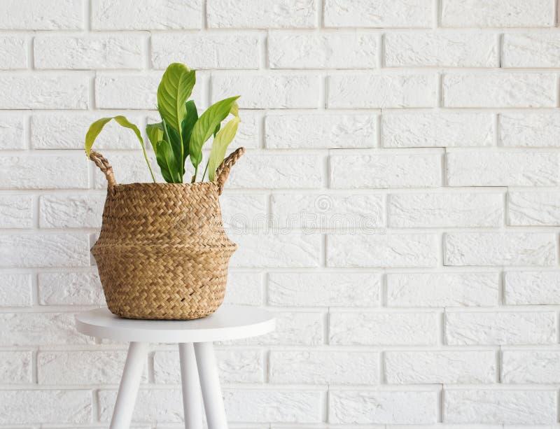 Planta verde en una cesta de la paja en el fondo blanco de la pared de ladrillo foto de archivo