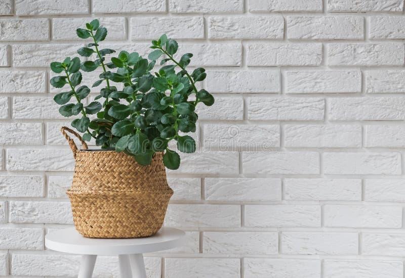 Planta verde en una cesta decorativa en interior moderno fotos de archivo