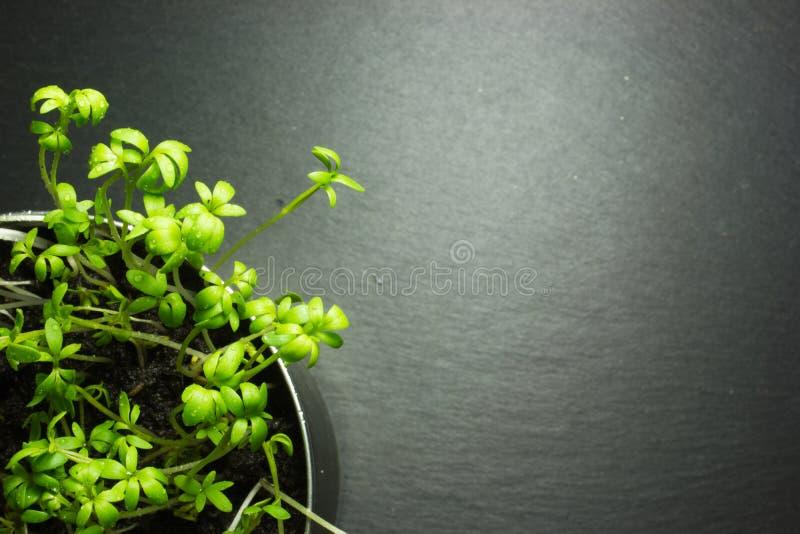Planta verde en una lata fotos de archivo libres de regalías