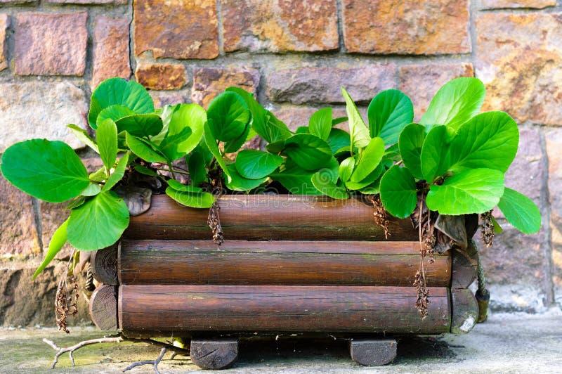 Planta verde fresca fotos de stock