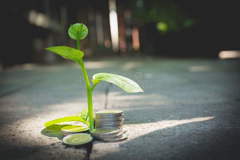 Planta verde joven con la moneda de la pila en la tierra para el negocio cada vez mayor fotos de archivo libres de regalías
