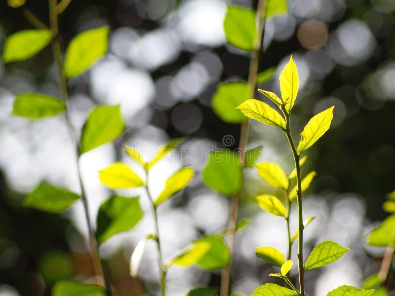 A planta verde min?scula nova deixa a profundidade de campo rasa sob a luz solar natural imagens de stock royalty free