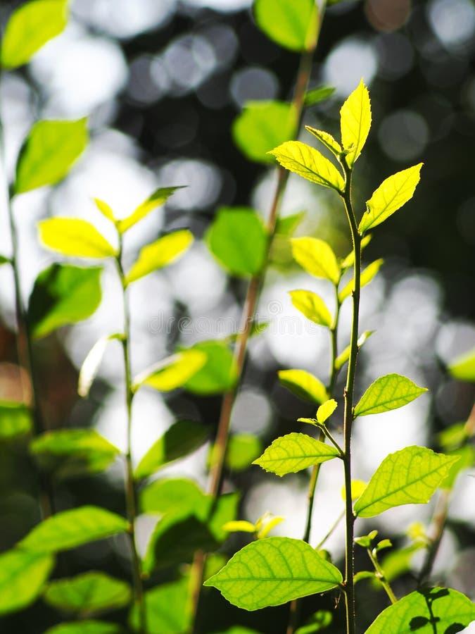 A planta verde min?scula nova deixa a profundidade de campo rasa sob a luz solar natural imagem de stock