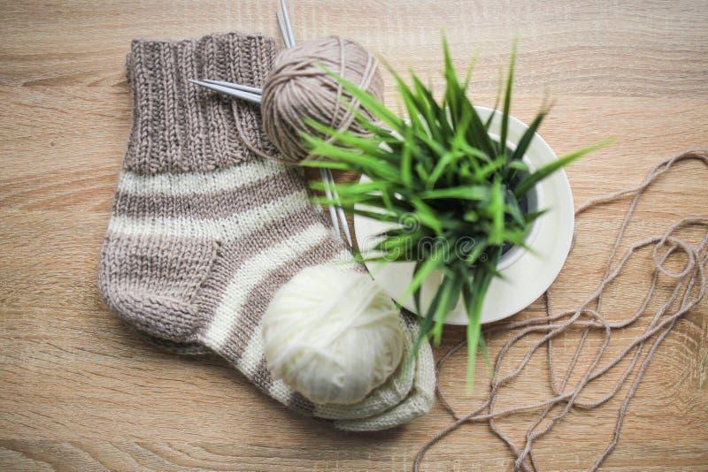 A planta verde no fio do potenciômetro, o bege e o branco, Knitted listrou a peúga bege-bege está na tabela foto de stock