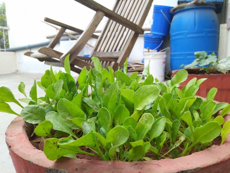 Planta verde no potenciômetro imagem de stock