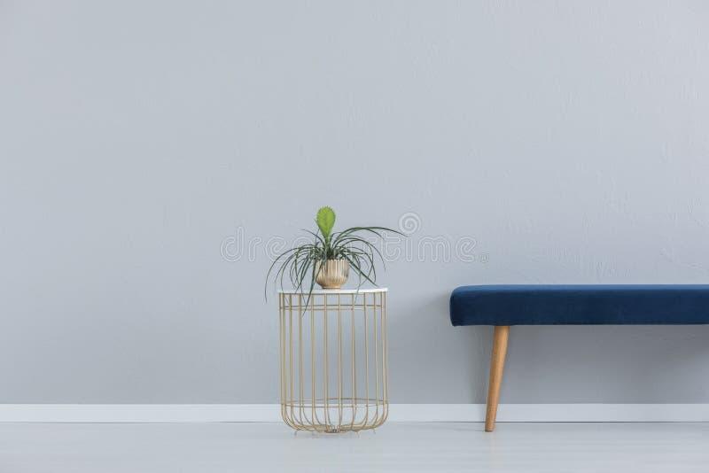 Planta verde no potenciômetro dourado e canapé azul de veludo, foto real com espaço da cópia imagens de stock