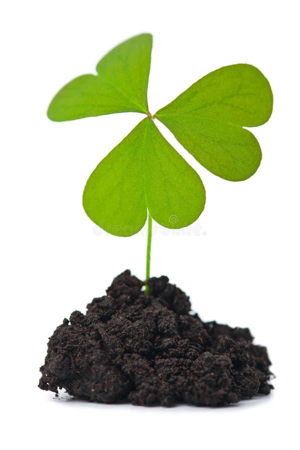 Planta verde no solo escuro isolado fotografia de stock