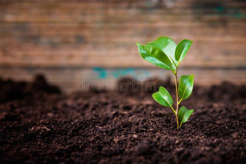 Planta verde nova imagens de stock royalty free