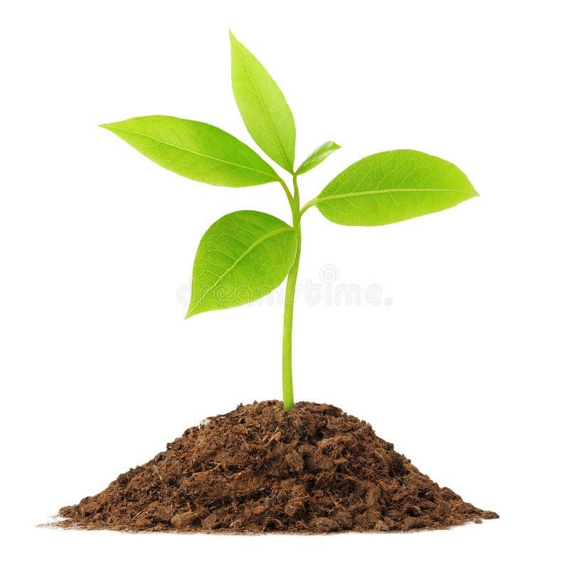 Planta verde nova foto de stock