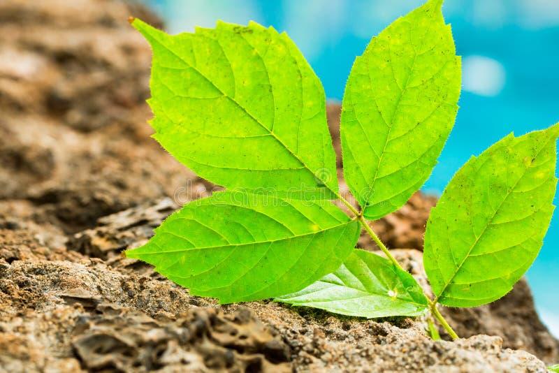Planta verde, nueva vida imagenes de archivo