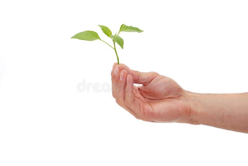 Planta verde para o melhor ambiente foto de stock