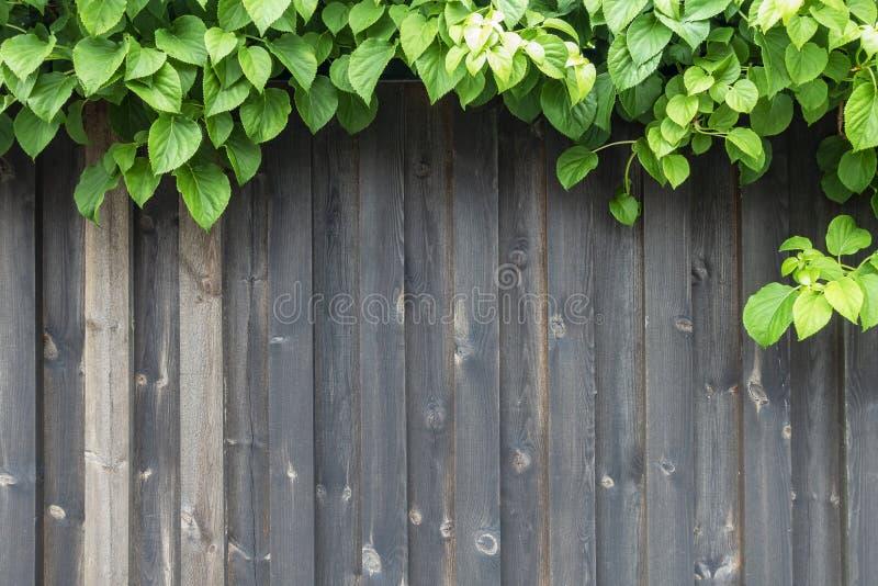 Planta verde pequena no fundo de madeira do vintage, projeto da beira fotos de stock