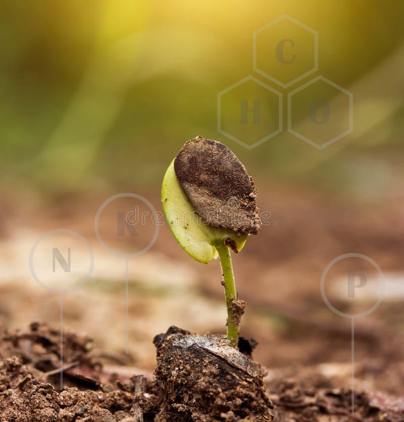 Planta verde pequena no solo imagem de stock
