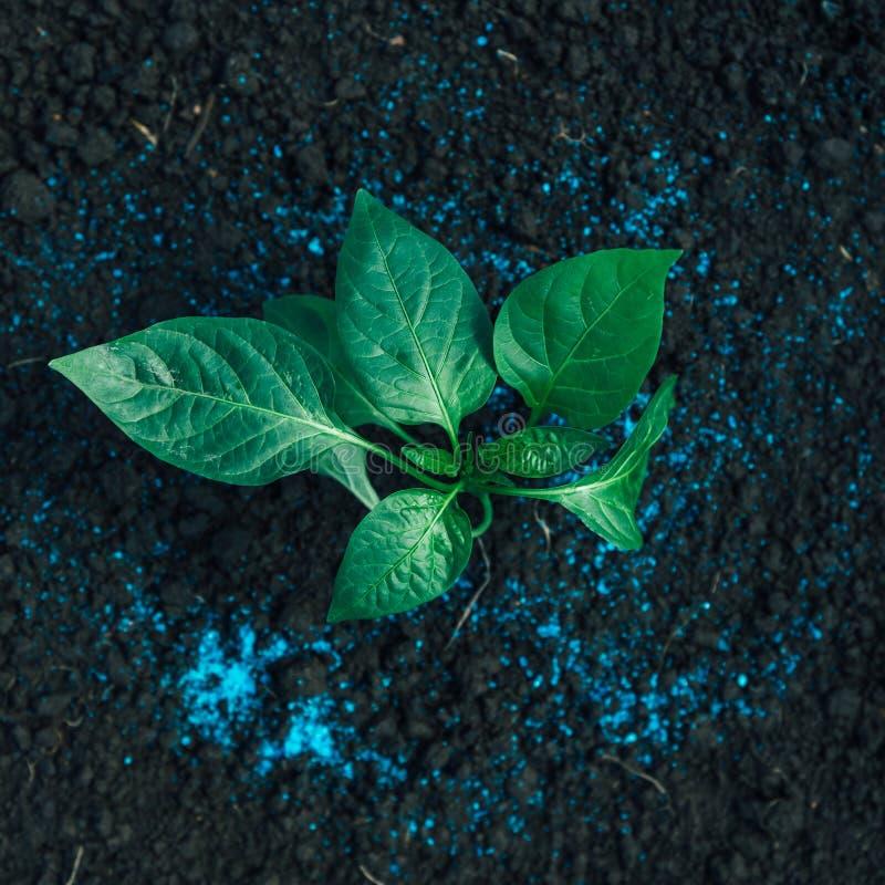 Download Planta Verde Y Fertilizante Imagen de archivo - Imagen de seedling, verde: 41911883