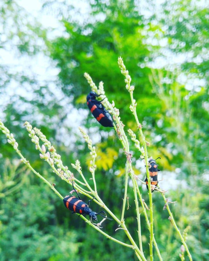 Planta verde y pequeños insectos foto de archivo