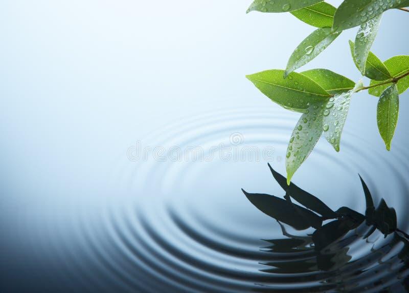 Planta y agua imagenes de archivo