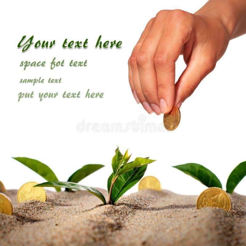 Planta y dinero. foto de archivo libre de regalías
