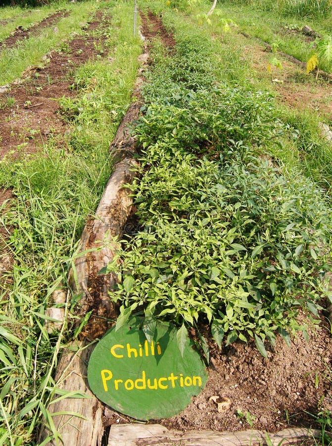 Plantaardige bedden, organisch landbouwbedrijf stock afbeelding