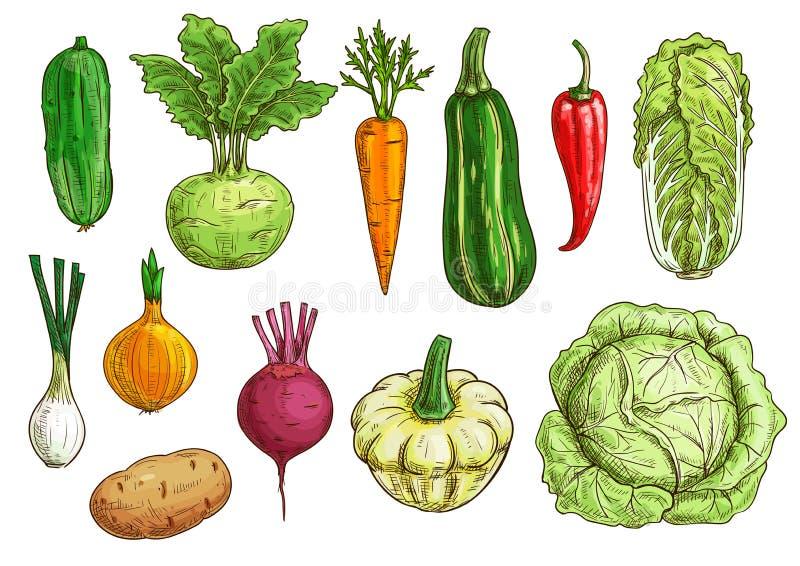Plantaardige geïsoleerde die schets voor voedselontwerp wordt geplaatst stock illustratie