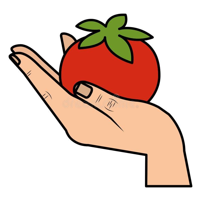 Plantaardige gezonde voedsel van de hand het opheffende tomaat stock illustratie