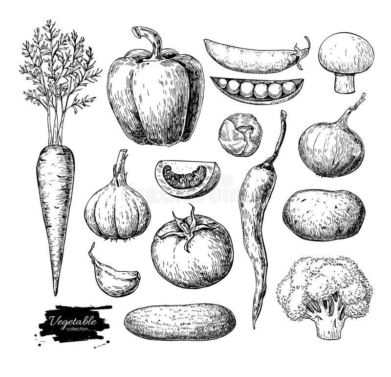 Plantaardige hand getrokken vectorreeks Geïsoleerde vegetariër gegraveerde st stock illustratie