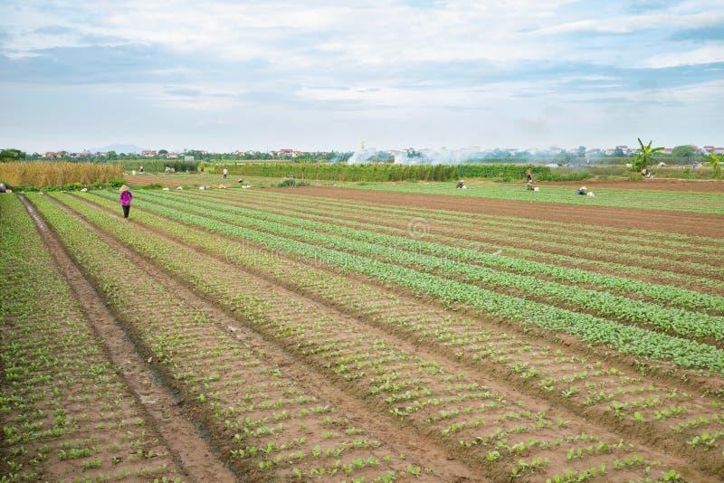 Plantaardige percelen op landbouwgebied in voorsteden van Hanoi, Vietnam royalty-vrije stock foto's