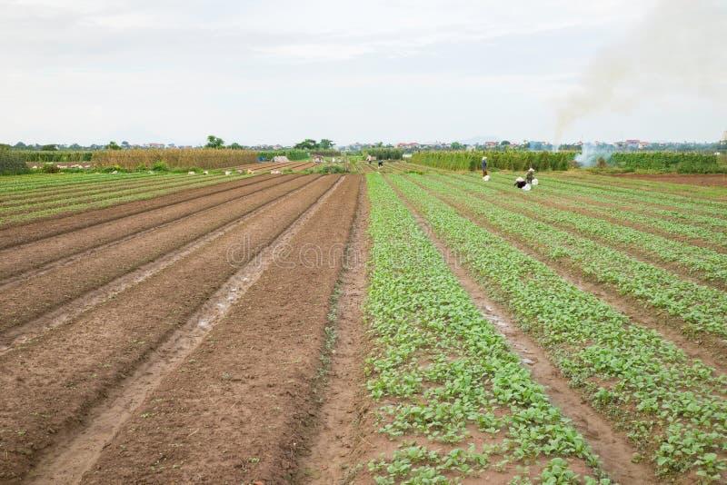Plantaardige percelen op landbouwgebied in voorsteden van Hanoi, Vietnam stock foto's