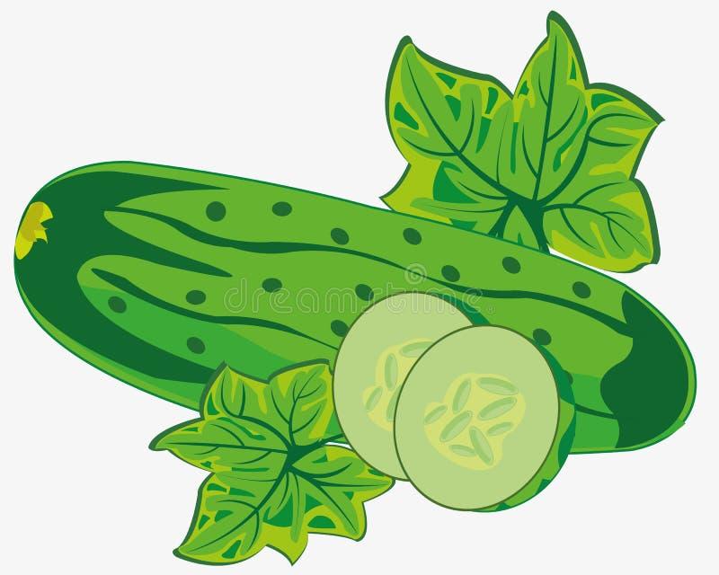 Plantaardige rijpe komkommer stock illustratie