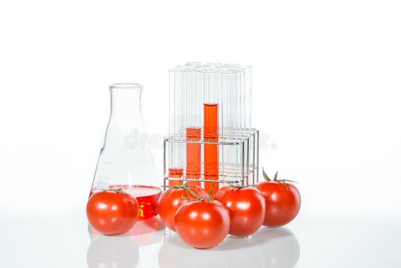 Plantaardige test, Genetische modificatie, tomaat stock afbeeldingen