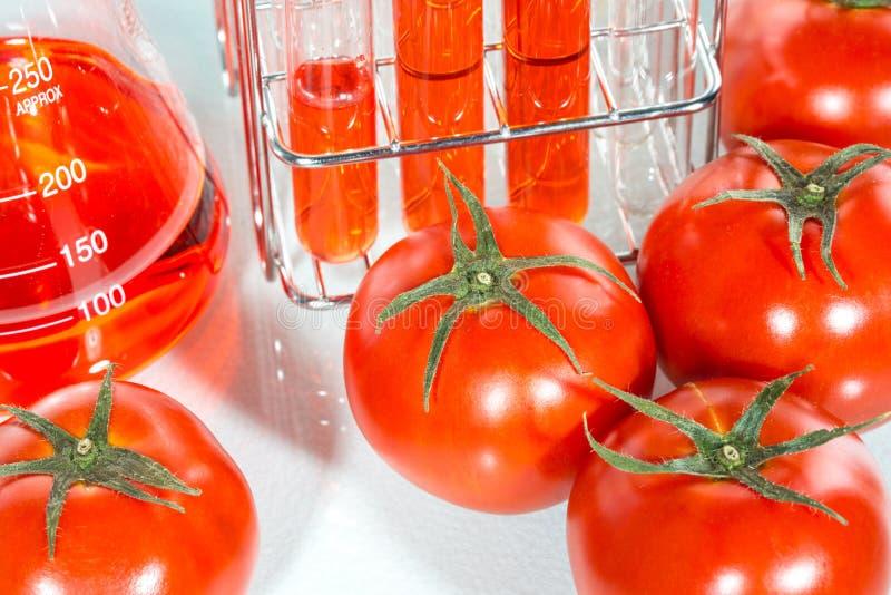 Plantaardige test, Genetische modificatie, tomaat stock foto's