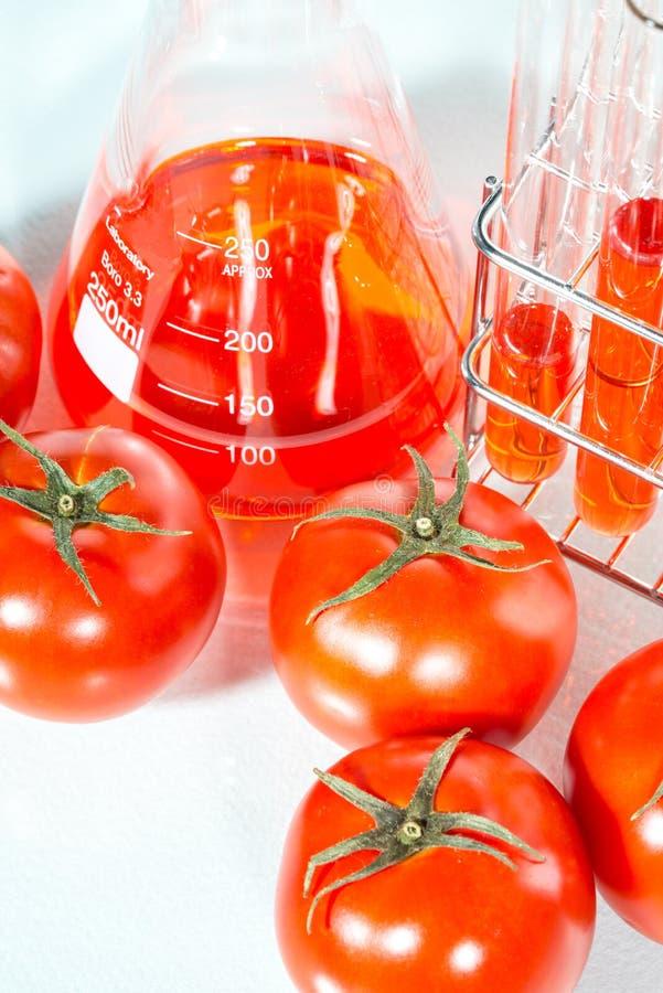 Plantaardige test, Genetische modificatie, tomaat royalty-vrije stock foto