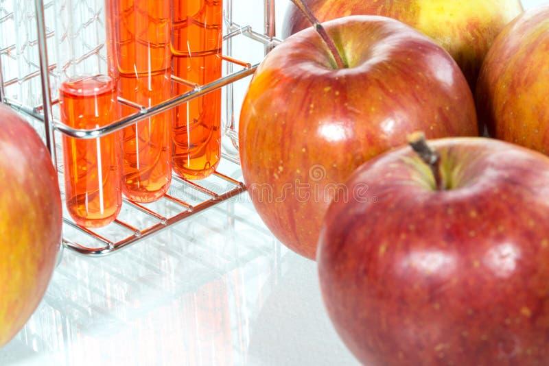 Plantaardige test, Genetische Modificationm, appel royalty-vrije stock afbeelding