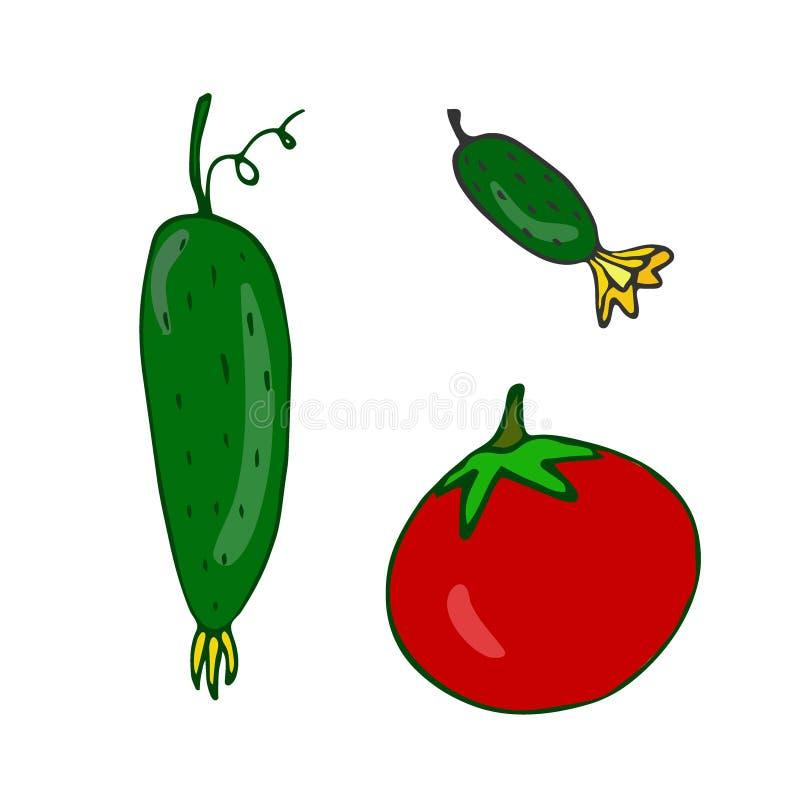 Plantaardige vectorpictogrammen komkommer Tomaat Zaden die ontwerp verpakken Ingrediënten voor receptenboek stock illustratie