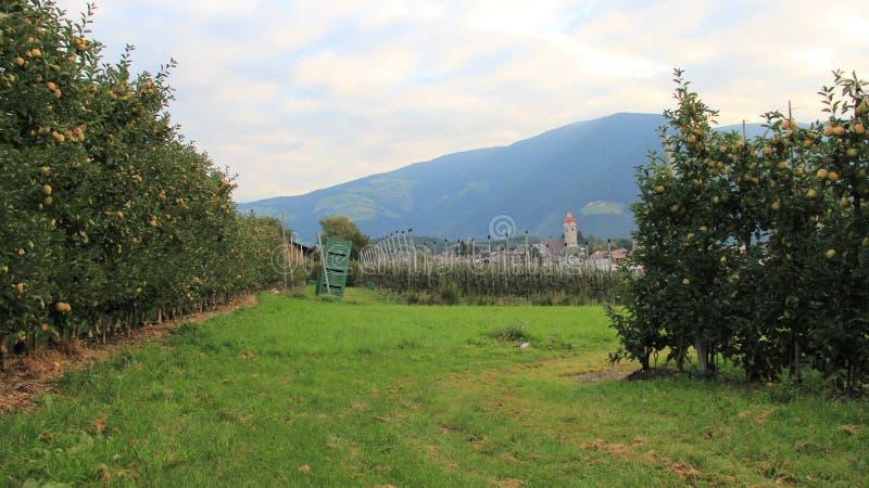 Plantación de Apple con el pueblo en valles italianos de las montañas foto de archivo
