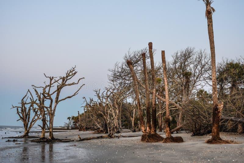 Plantación de la bahía de la botánica, isla de Edisto, Carolina del Sur fotos de archivo libres de regalías