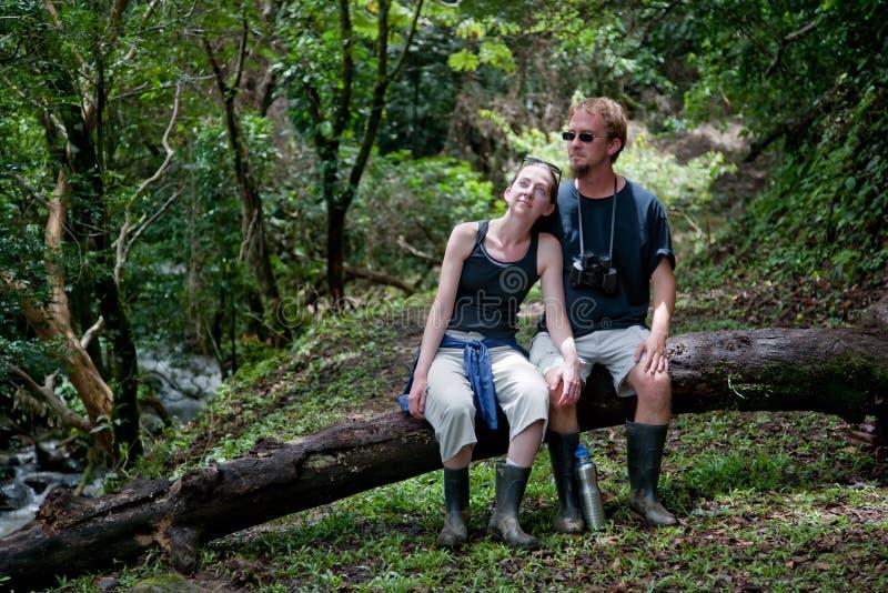 Plantación de los pares en Costa Rica fotos de archivo