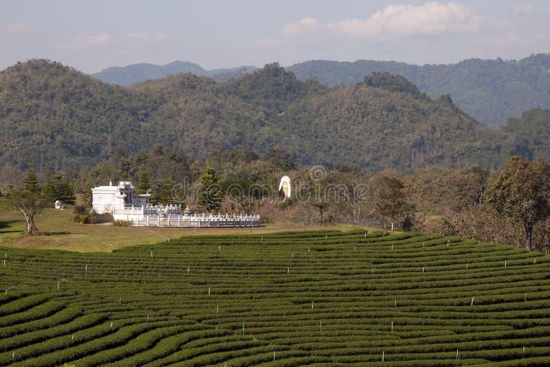 Plantación de té con las colinas Himalayan boscosas en fondo fotografía de archivo libre de regalías