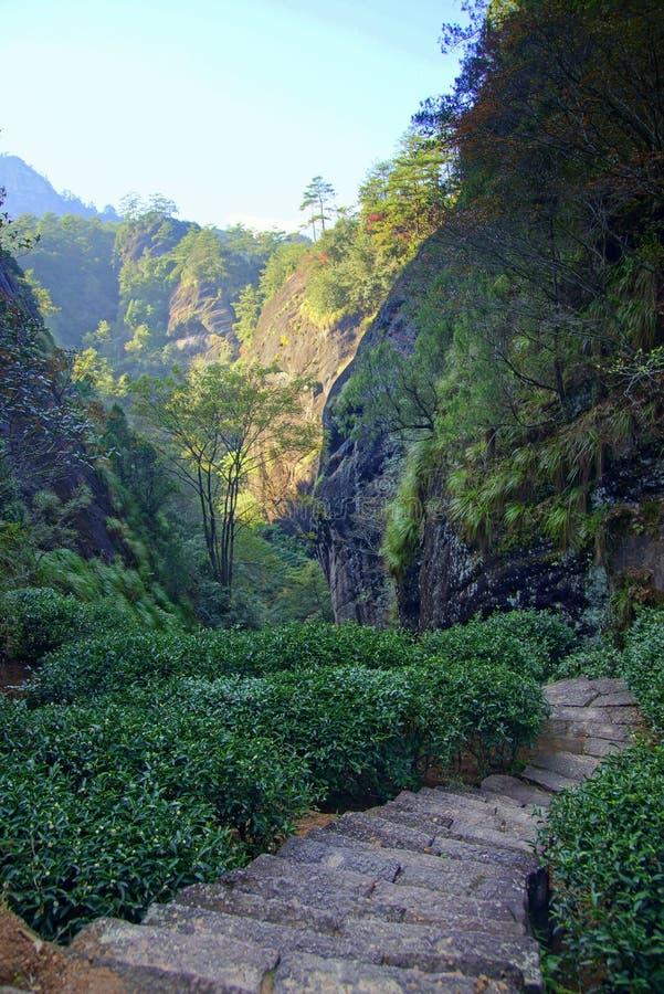Plantación de té en la provincia de Fujian, China imagenes de archivo