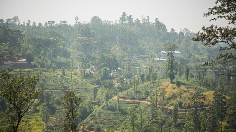 Plantación de té verde fresca hermosa en Sri Lanka imagenes de archivo