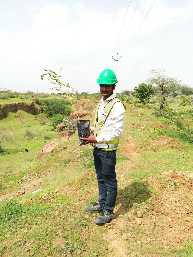 Plantación del árbol y ambiente seguro imagen de archivo libre de regalías