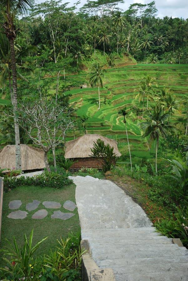 Plantación del arroz de Bali imagen de archivo libre de regalías