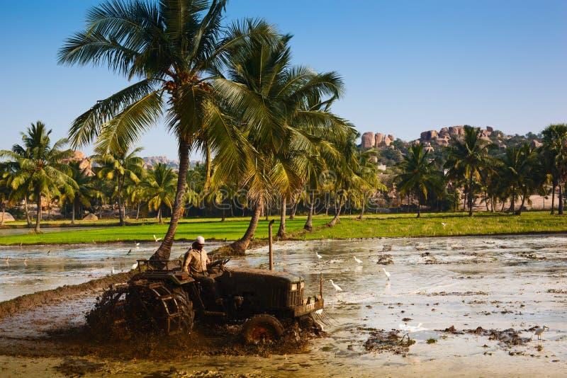 Plantación del arroz en la India imagenes de archivo