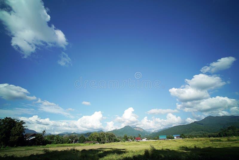 Download Plantación Del Campo Del Arroz Imagen de archivo - Imagen de cosecha, paisaje: 64213183