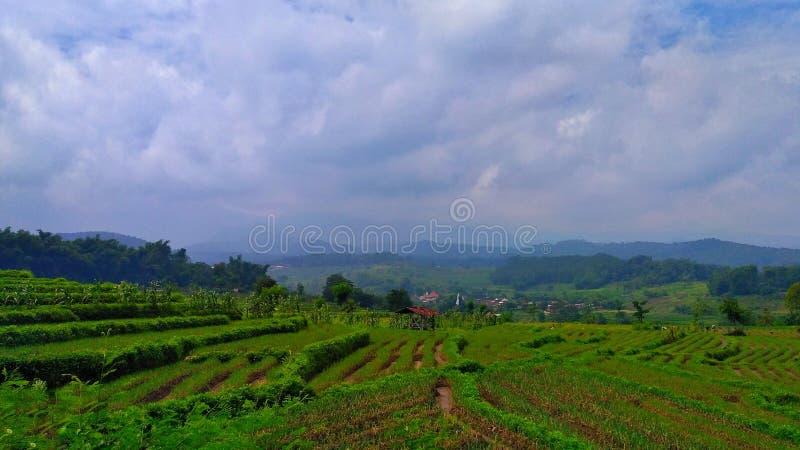 plantación en las colinas imagen de archivo