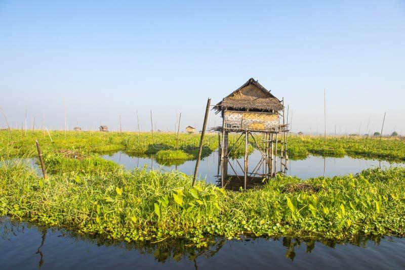 Plantación flotante de verduras en el lago Inle en Myanmar imágenes de archivo libres de regalías