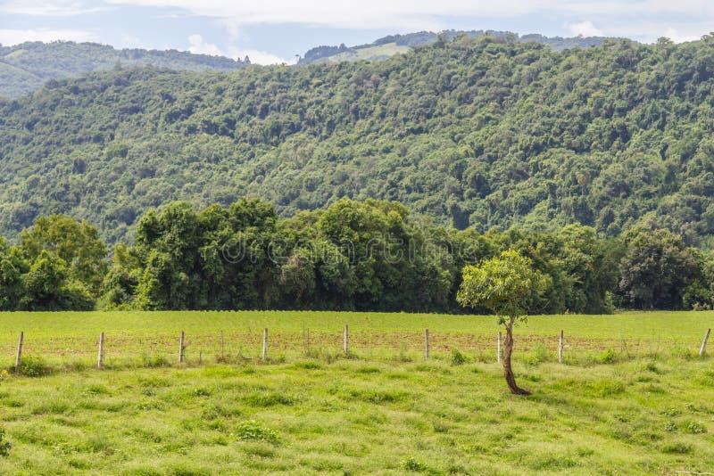 Plantación y bosque imagen de archivo