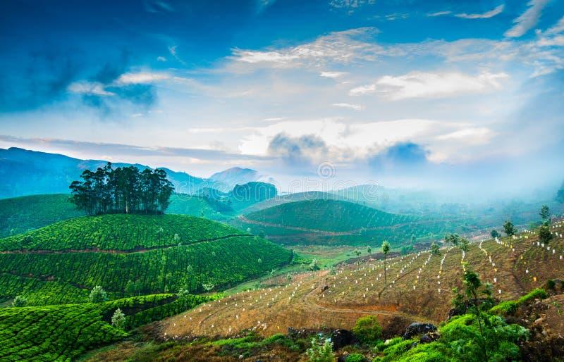 Plantaciones de té en la India fotografía de archivo libre de regalías